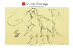 animal16-copia