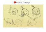 animal18-copia