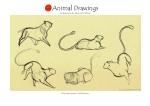 animal19-copia