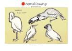 animal21 copy