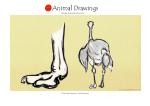 animal22 copy